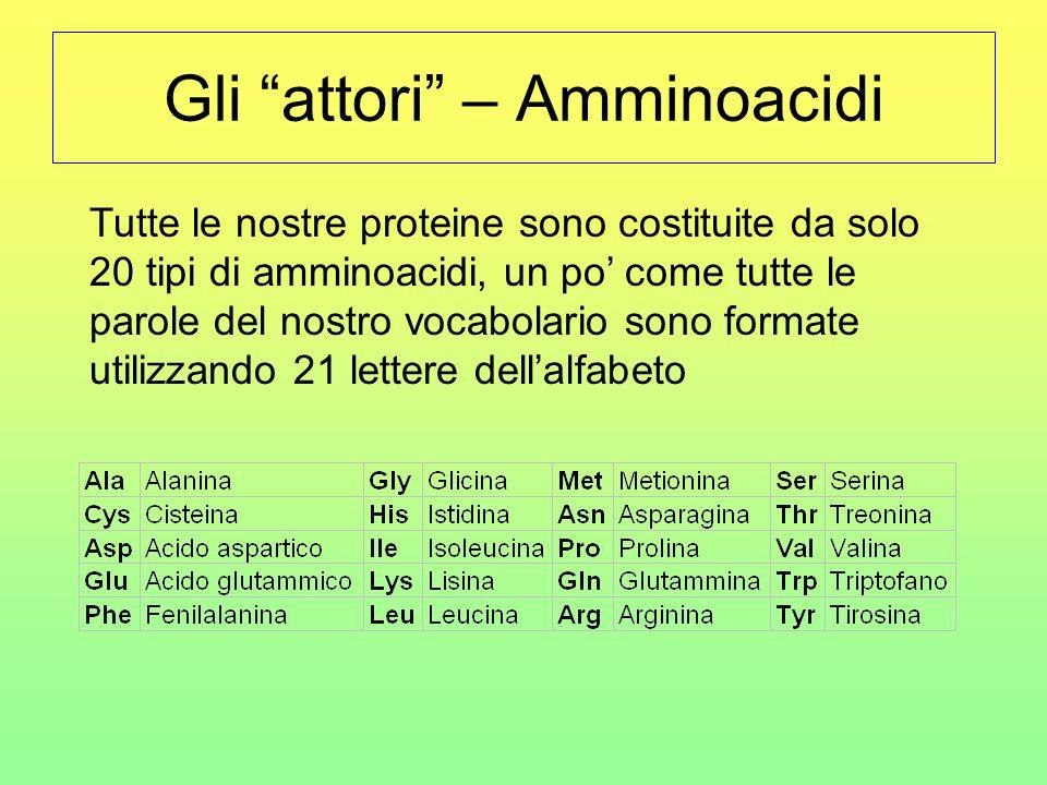 """Gli """"attori"""" – Amminoacidi Tutte le nostre proteine sono costituite da solo 20 tipi di amminoacidi, un po' come tutte le parole del nostro vocabolario"""