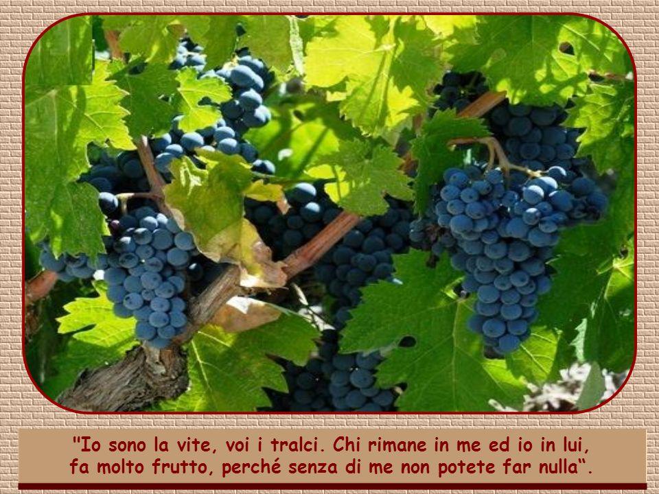 Hai osservato come Gesù non domandi direttamente il frutto, ma lo veda come conseguenza del rimanere uniti a lui?