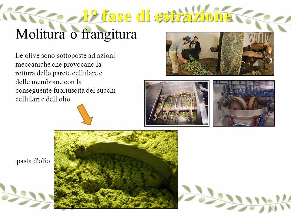 1° fase di estrazione Molitura o frangitura Le olive sono sottoposte ad azioni meccaniche che provocano la rottura della parete cellulare e delle memb