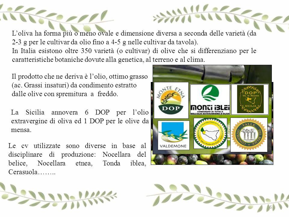 L'oliva ha forma più o meno ovale e dimensione diversa a seconda delle varietà (da 2-3 g per le cultivar da olio fino a 4-5 g nelle cultivar da tavola