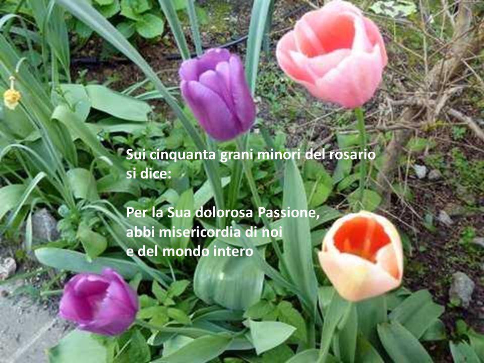 Sui cinquanta grani minori del rosario si dice: Per la Sua dolorosa Passione, abbi misericordia di noi e del mondo intero