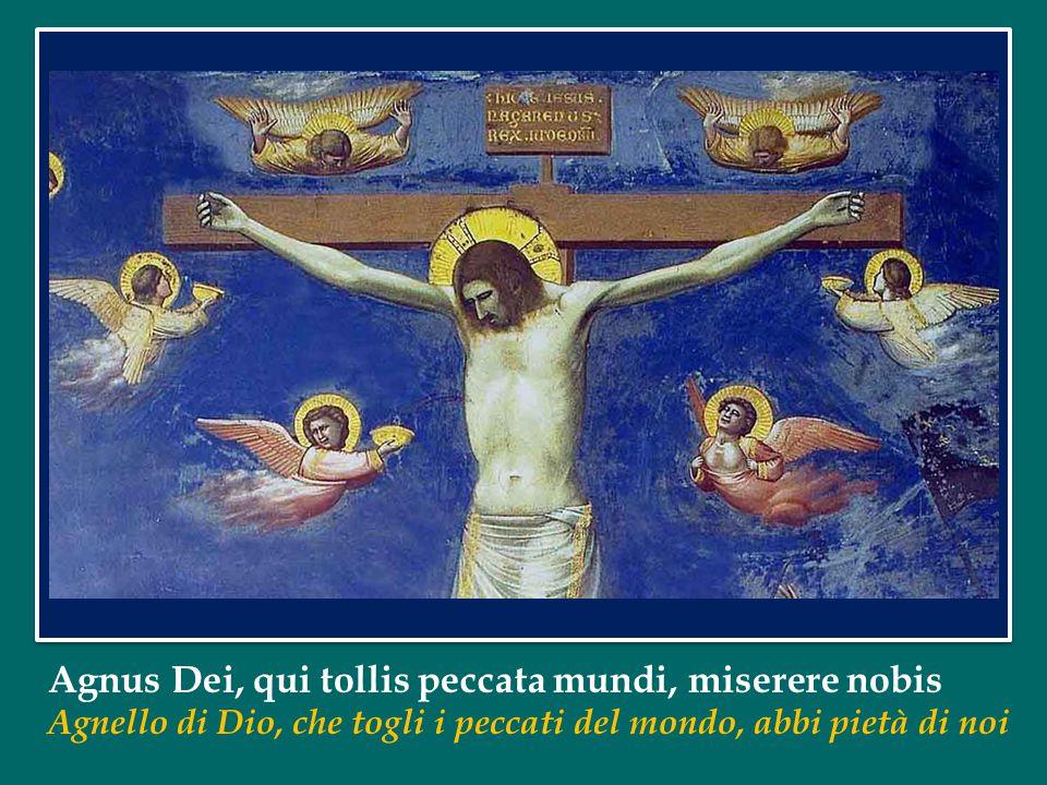 Agnus Dei, qui tollis peccata mundi, miserere nobis Agnello di Dio, che togli i peccati del mondo, abbi pietà di noi