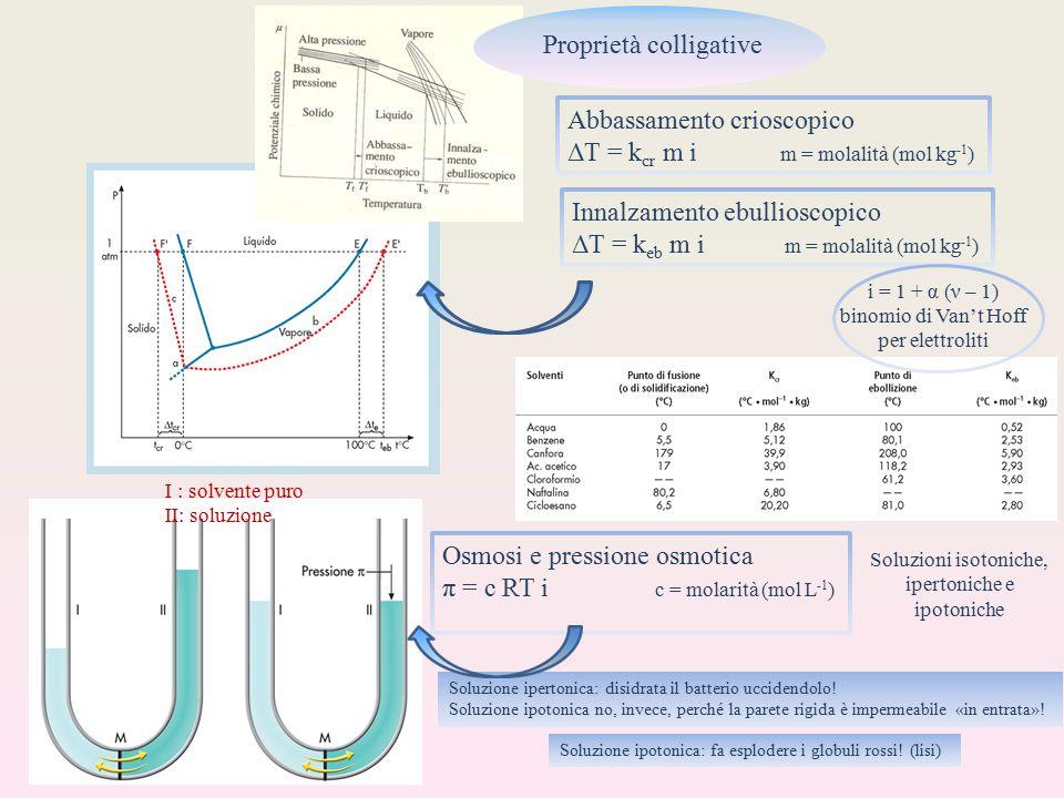 Proprietà colligative Abbassamento crioscopico ΔT = k cr m i m = molalità (mol kg -1 ) Innalzamento ebullioscopico ΔT = k eb m i m = molalità (mol kg -1 ) i = 1 + α (ν – 1) binomio di Van't Hoff per elettroliti Osmosi e pressione osmotica π = c RT i c = molarità (mol L -1 ) I : solvente puro II: soluzione Soluzioni isotoniche, ipertoniche e ipotoniche Soluzione ipertonica: disidrata il batterio uccidendolo.