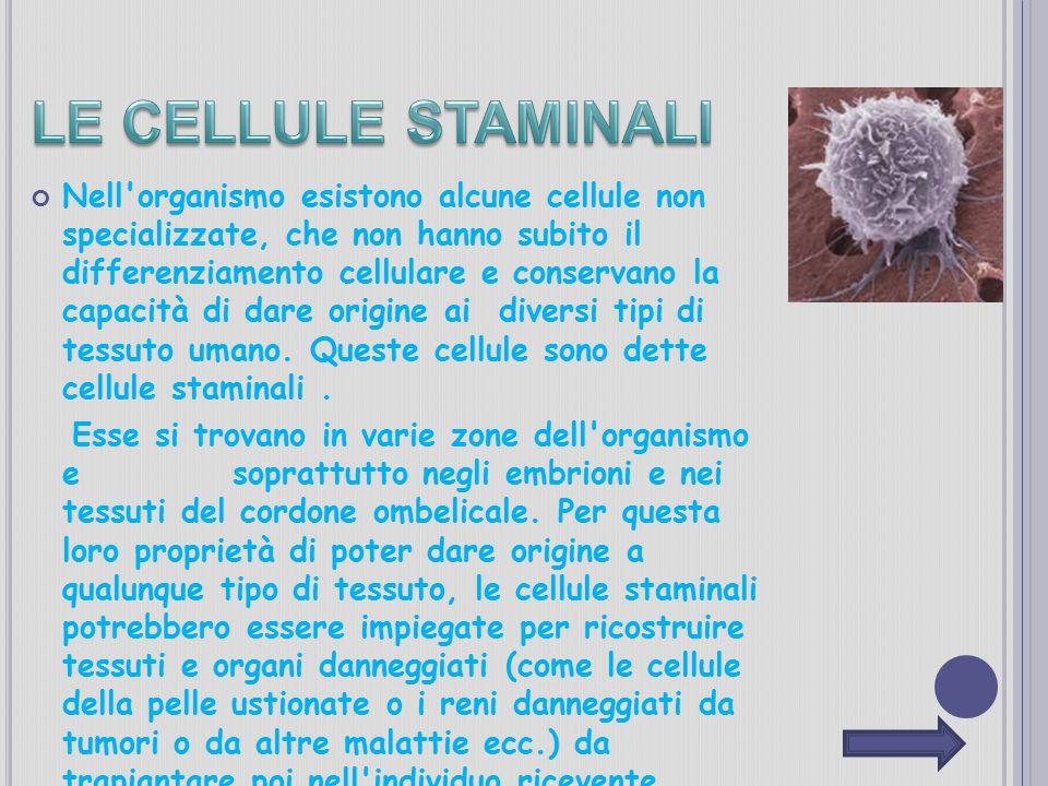 Nell'organismo esistono alcune cellule non specializzate, che non hanno subito il differenziamento cellulare e conservano la capacità di dare origine