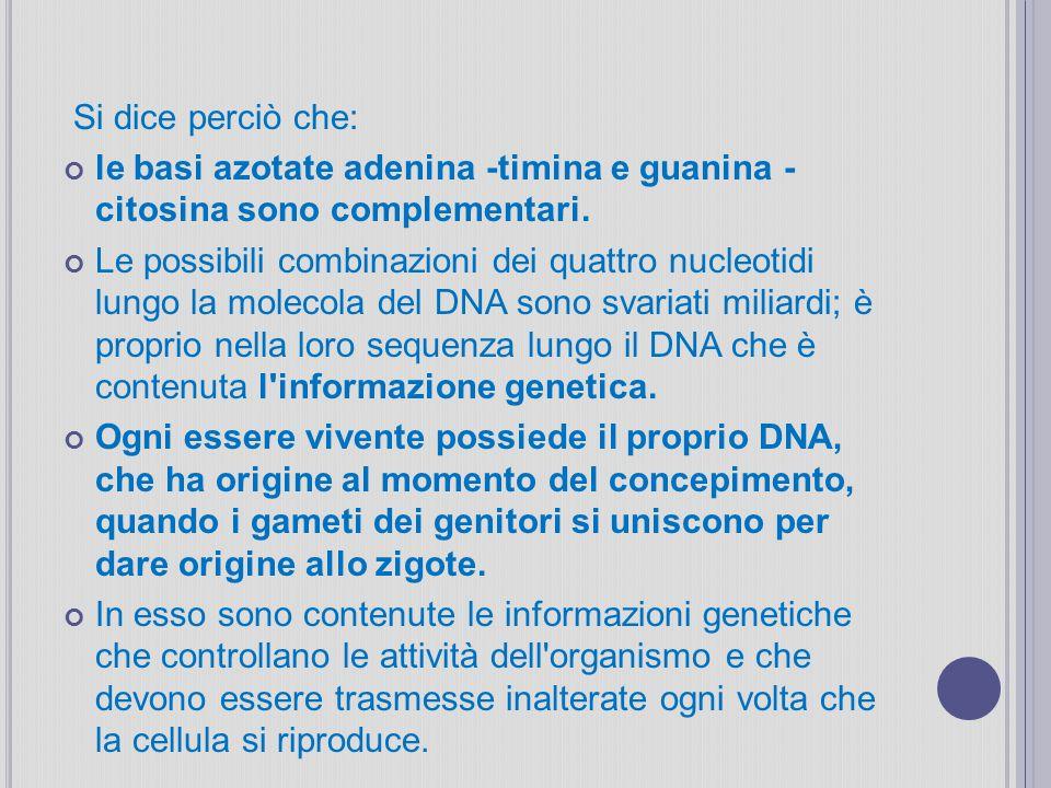 Si dice perciò che: le basi azotate adenina -timina e guanina - citosina sono complementari. Le possibili combinazioni dei quattro nucleotidi lungo la
