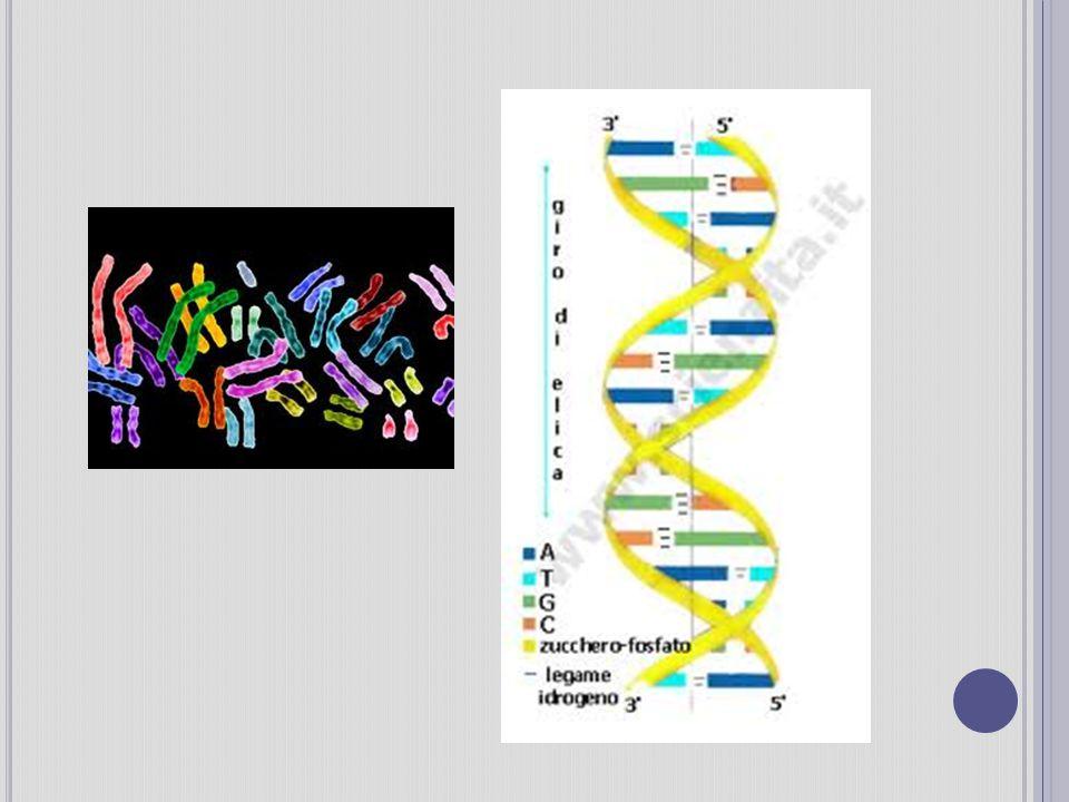 L A CLONAZIONE È possibile fare copie identiche di organismi complessi come i mammiferi .