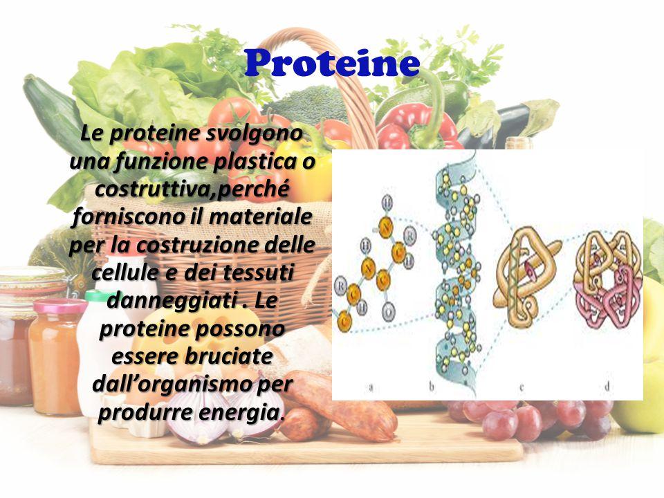 Proteine Le proteine svolgono una funzione plastica o costruttiva,perché forniscono il materiale per la costruzione delle cellule e dei tessuti danneggiati.
