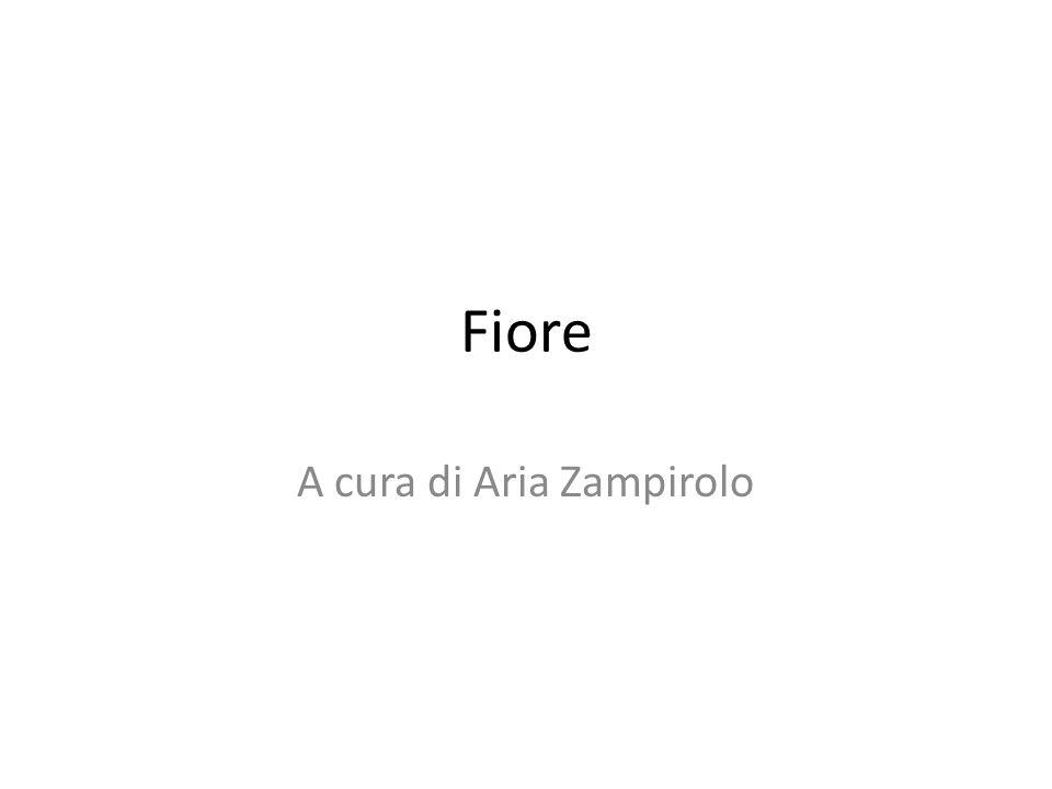 Fiore A cura di Aria Zampirolo