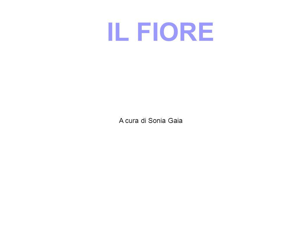IL FIORE A cura di Sonia Gaia