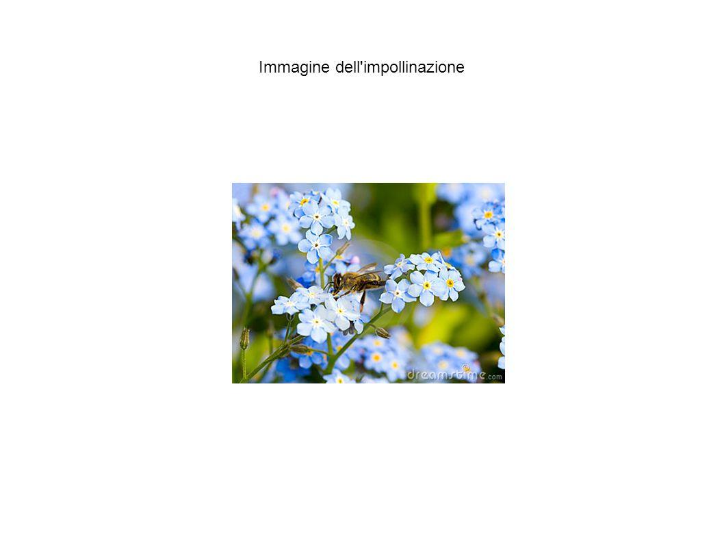 Immagine dell'impollinazione