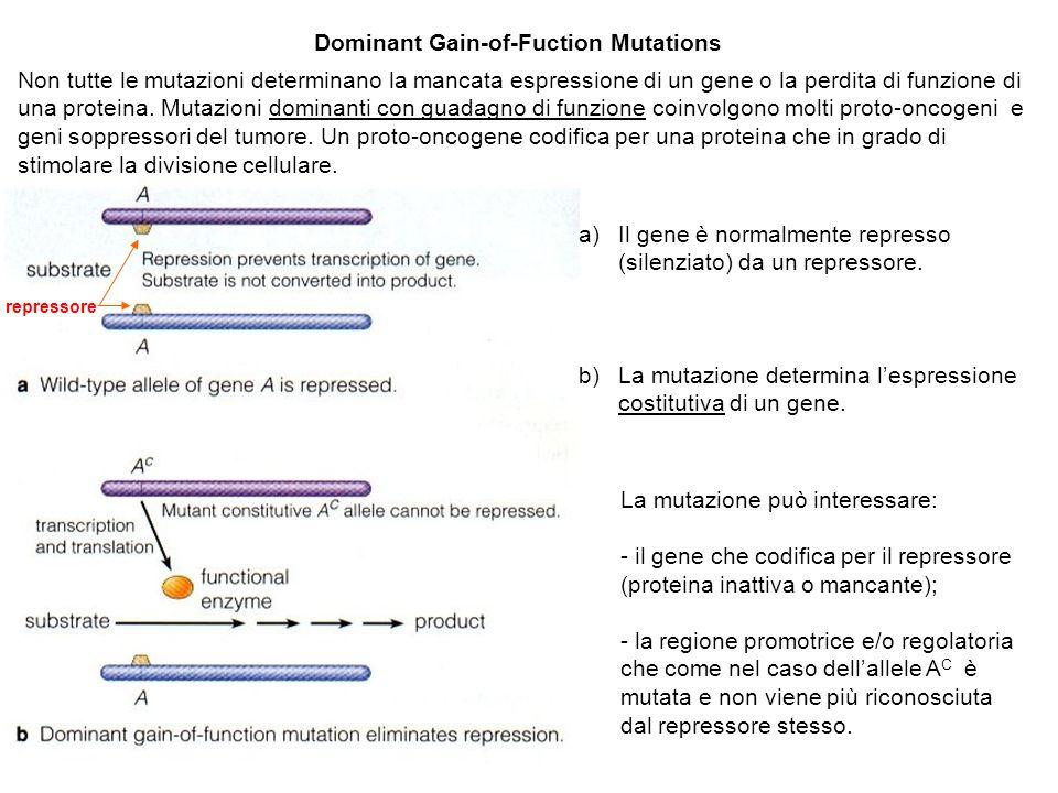 Dominant Gain-of-Fuction Mutations a)Il gene è normalmente represso (silenziato) da un repressore. b)La mutazione determina l'espressione costitutiva