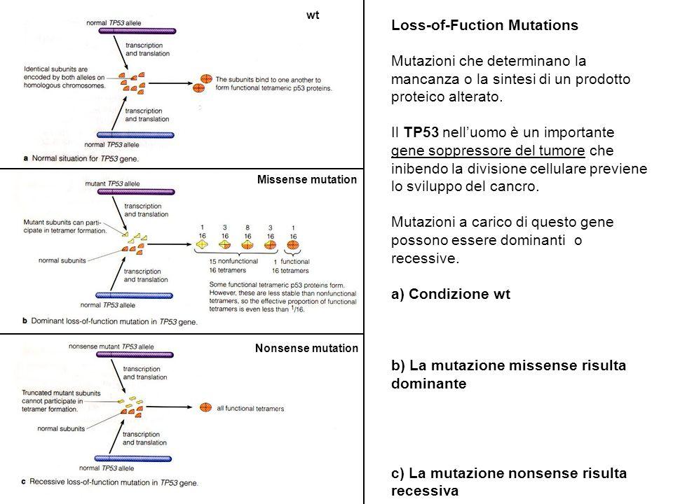Loss-of-Fuction Mutations Mutazioni che determinano la mancanza o la sintesi di un prodotto proteico alterato. Il TP53 nell'uomo è un importante gene