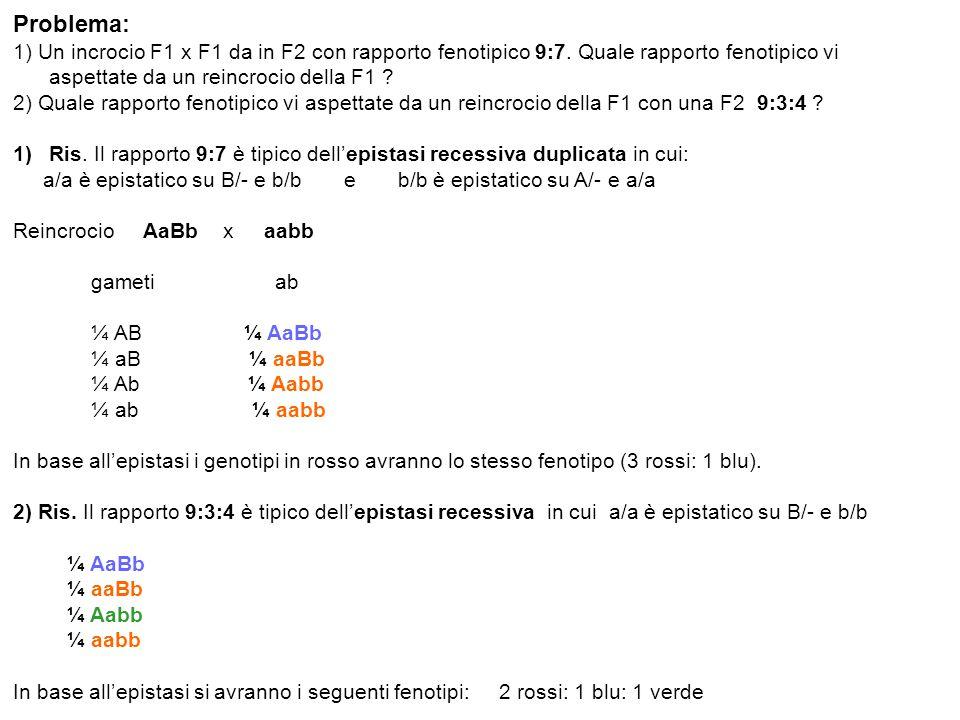 Problema: 1) Un incrocio F1 x F1 da in F2 con rapporto fenotipico 9:7. Quale rapporto fenotipico vi aspettate da un reincrocio della F1 ? 2) Quale rap