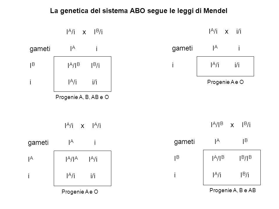 Problema: Sviluppare l'incrocio I A /I B x I B /i Quindi calcolare probabilità di ottenere due fratelli di cui il primo con gruppo sanguineo AB ed il secondo con gruppo sanguineo B.
