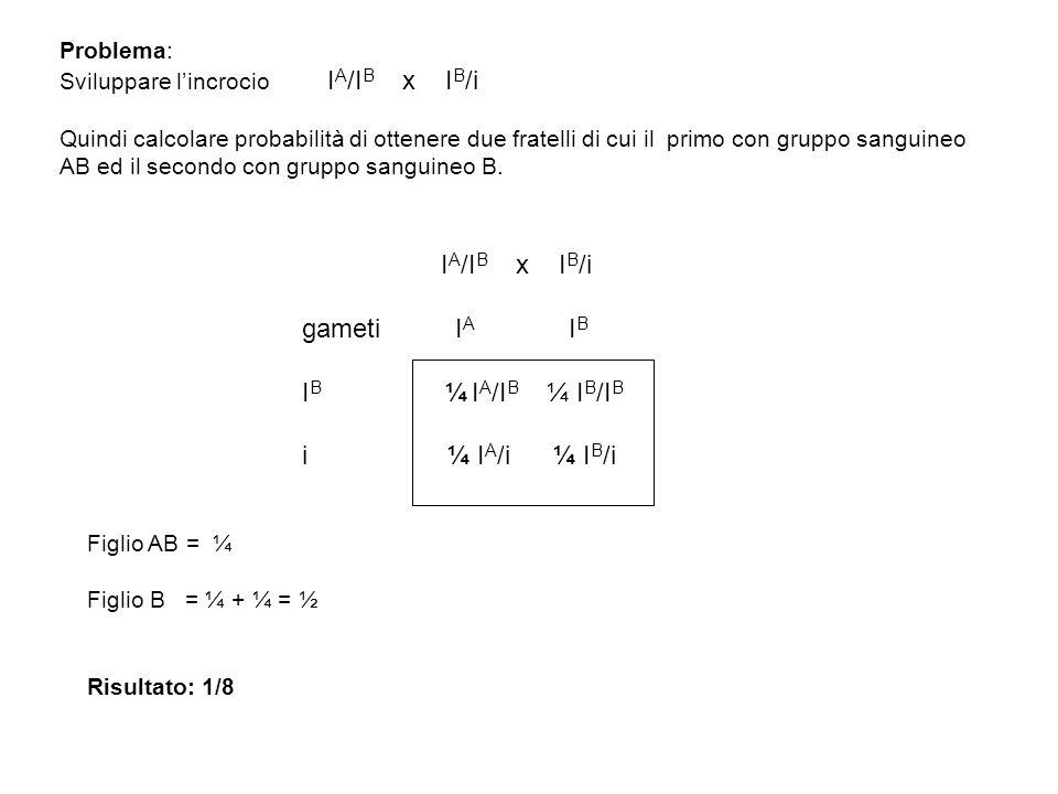Problema: Sviluppare l'incrocio I A /I B x I B /i Quindi calcolare probabilità di ottenere due fratelli di cui il primo con gruppo sanguineo AB ed il