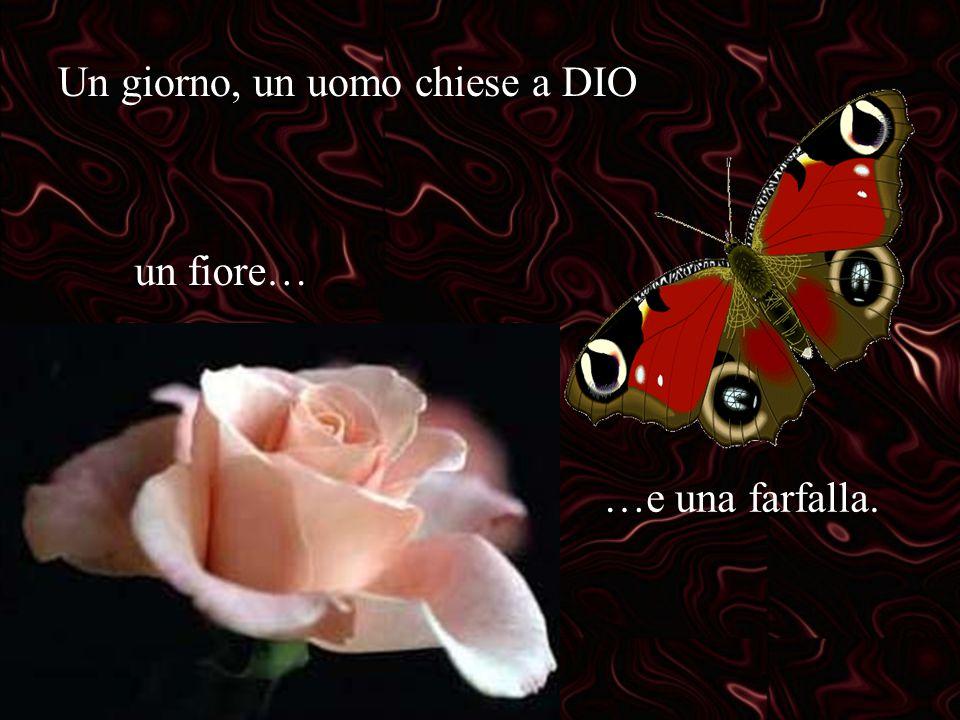 Un giorno, un uomo chiese a DIO un fiore… …e una farfalla.
