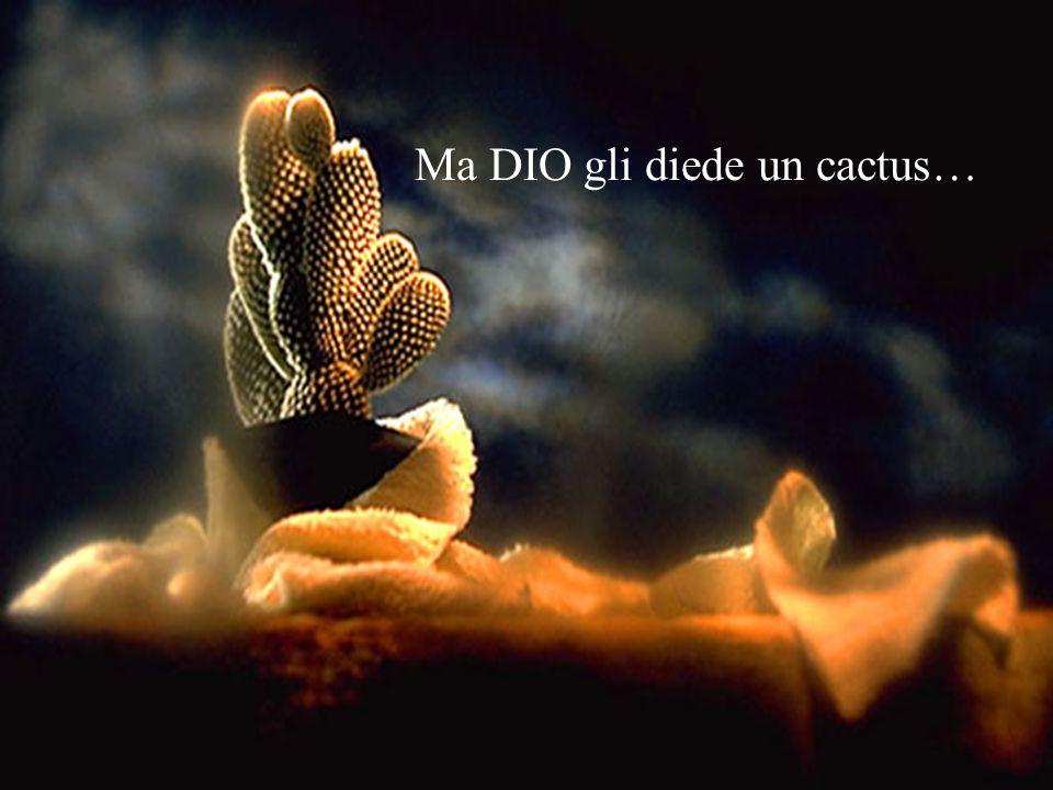 Ma DIO gli diede un cactus…