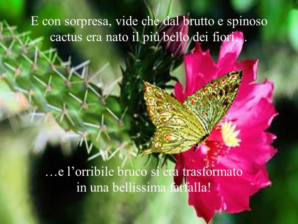 E con sorpresa, vide che dal brutto e spinoso cactus era nato il più bello dei fiori… …e l'orribile bruco si era trasformato in una bellissima farfalla!