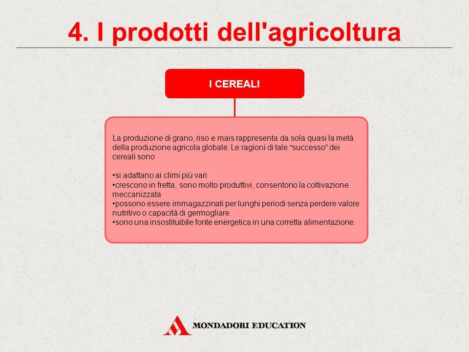 4. I prodotti dell'agricoltura I CEREALI I cereali sono piante erbacee, i cui semi, macinati, danno farina adatta alla panificazione. I cereali più co