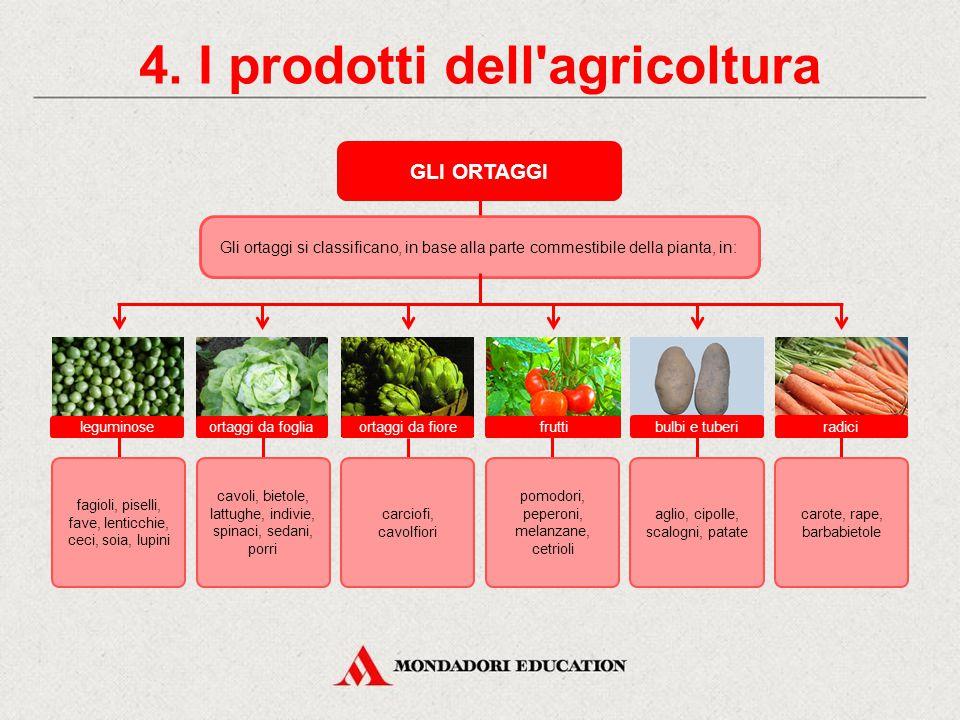 4. I prodotti dell'agricoltura L'ORTICOLTURA Nell'orticoltura si pratica la rotazione, in modo tale che il terrno non sia mai impoverito: alle legumin