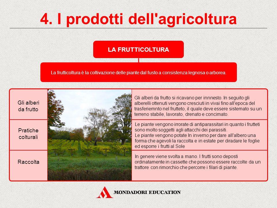 4. I prodotti dell'agricoltura GLI ORTAGGI Gli ortaggi si classificano, in base alla parte commestibile della pianta, in: leguminoseortaggi da fogliao