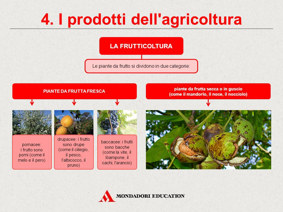 4. I prodotti dell'agricoltura LA FRUTTICOLTURA La frutticoltura è la coltivazione delle piante dal fusto a consistenza legnosa o arborea. Gli alberi