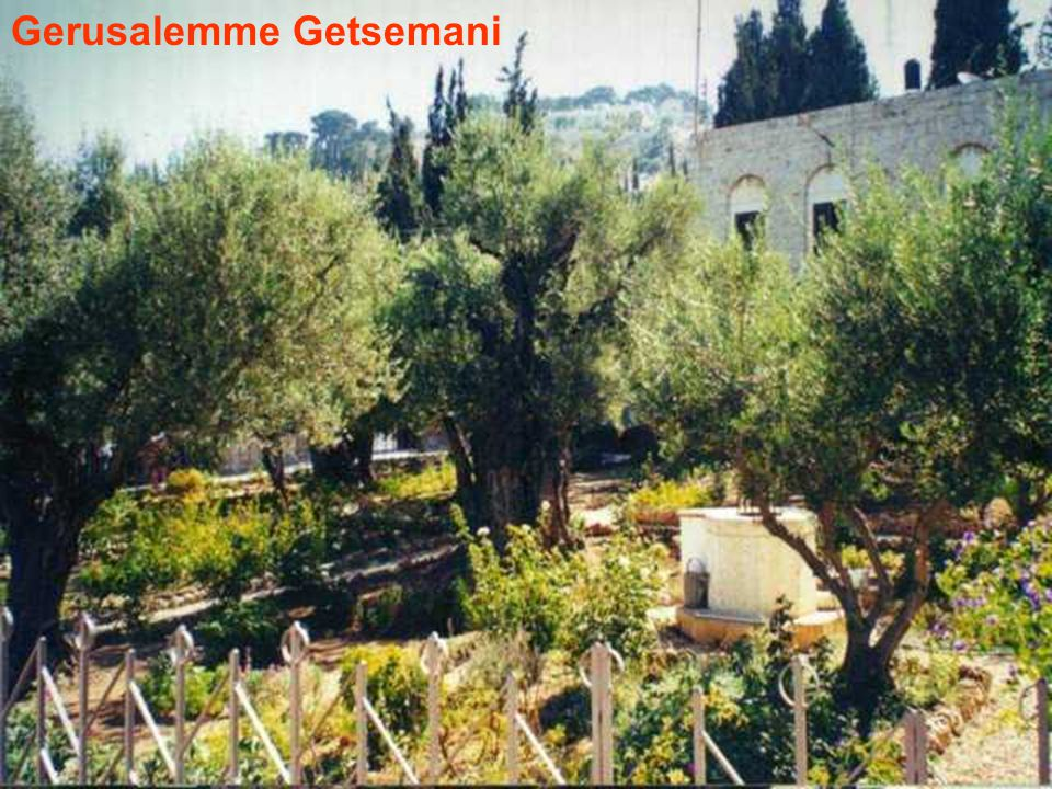 Gerusalemme Getsemani