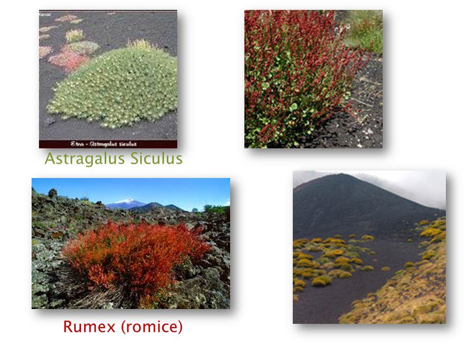 I primi a formarsi sono i muschi e i licheni