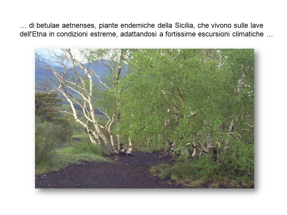 L'Etna offre degli splendidi paesaggi ricchi di svariate specie vegetali, come boschi di querce …