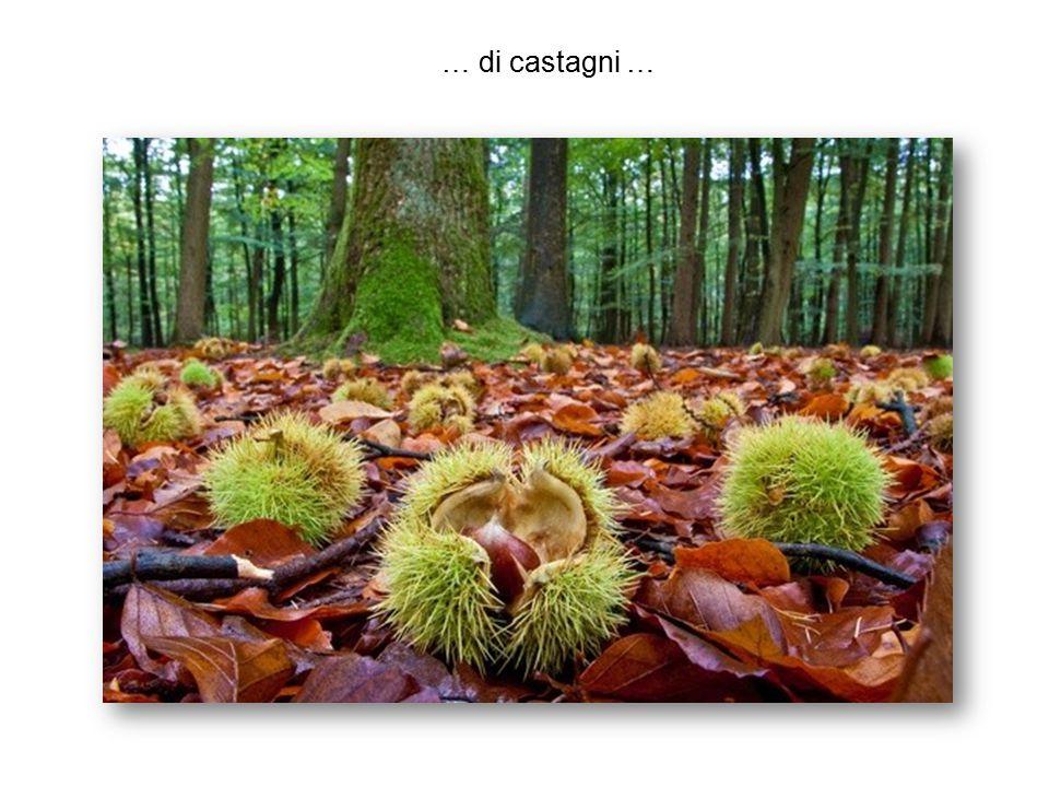 … di betulae aetnenses, piante endemiche della Sicilia, che vivono sulle lave dell Etna in condizioni estreme, adattandosi a fortissime escursioni climatiche …