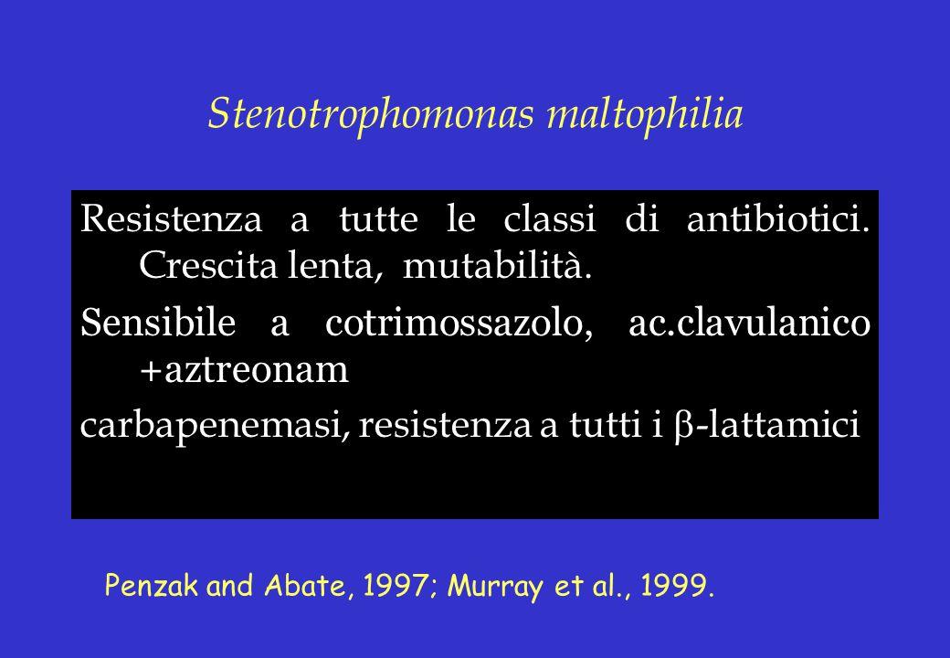 Stenotrophomonas maltophilia Resistenza a tutte le classi di antibiotici. Crescita lenta, mutabilità. Sensibile a cotrimossazolo, ac.clavulanico +aztr