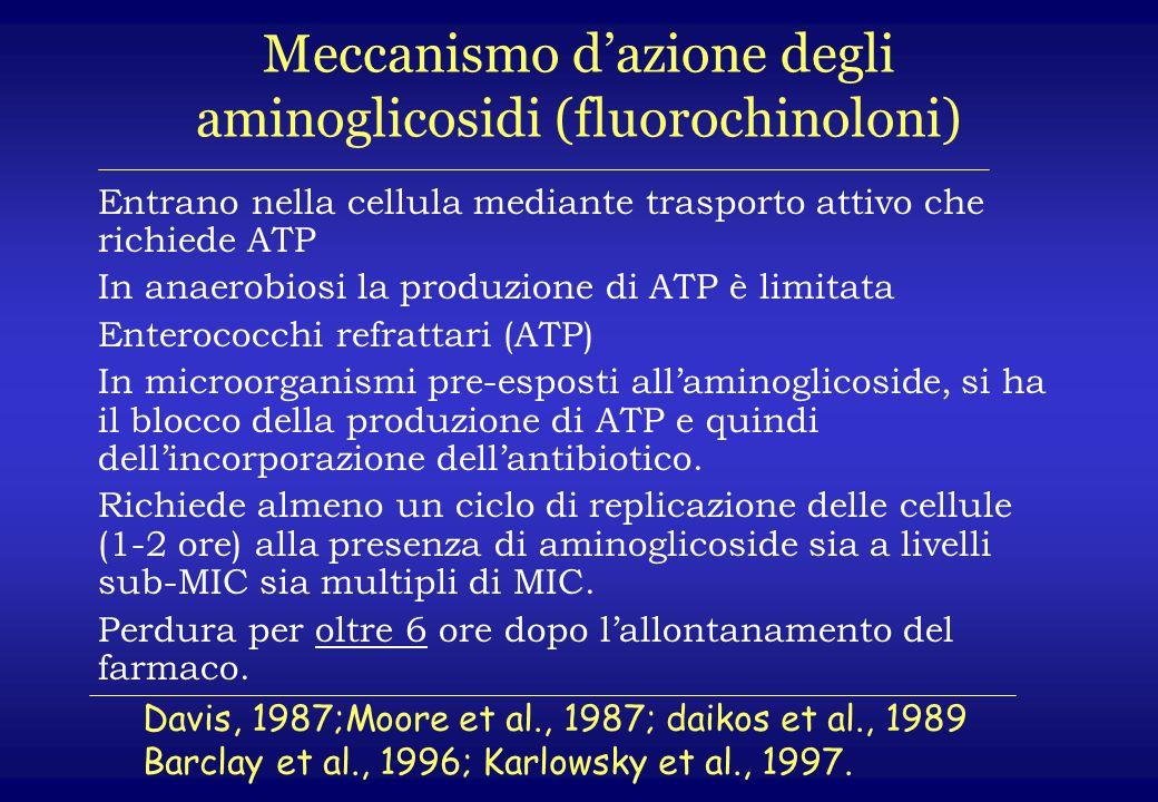 Meccanismo d'azione degli aminoglicosidi (fluorochinoloni) Entrano nella cellula mediante trasporto attivo che richiede ATP In anaerobiosi la produzio