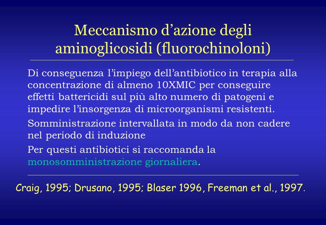 Meccanismo d'azione degli aminoglicosidi (fluorochinoloni) Di conseguenza l'impiego dell'antibiotico in terapia alla concentrazione di almeno 10XMIC p