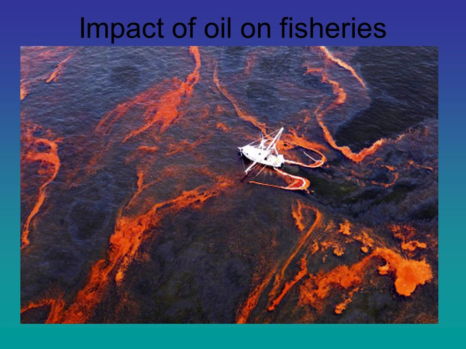 Impact of oil on fisheries Loss of breeding habitats Accumulation of toxins Poor taste Impacts on sport fishing