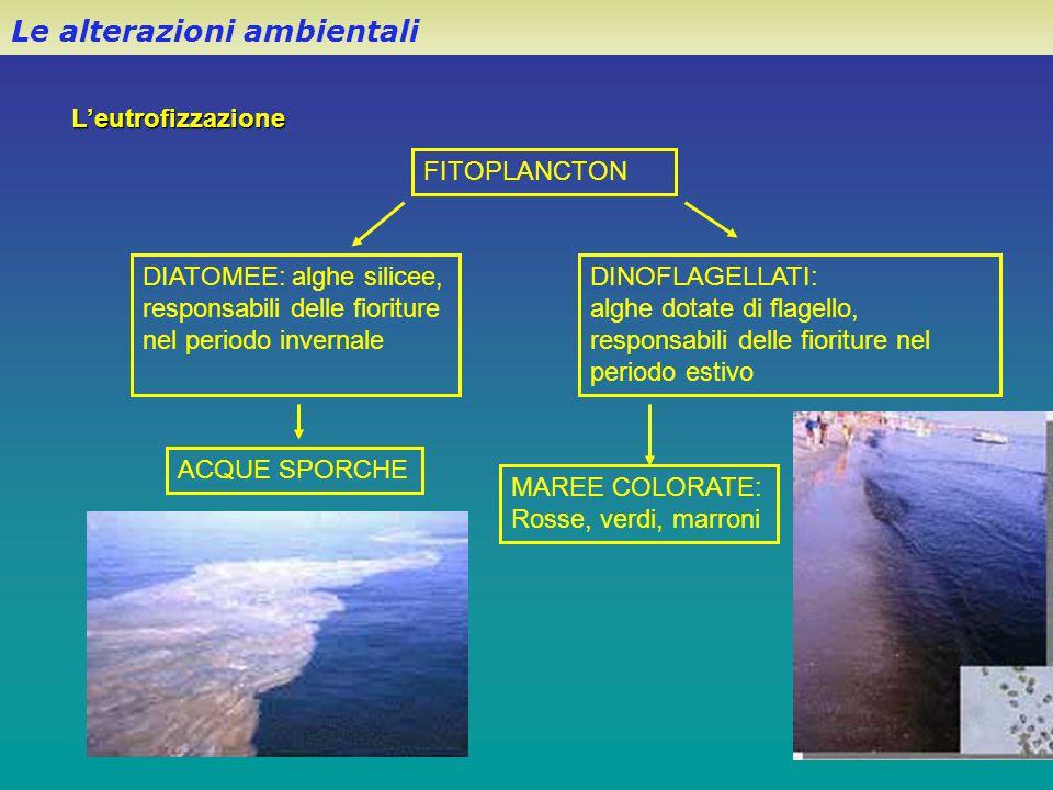 L'eutrofizzazione Le alterazioni ambientali FITOPLANCTON DIATOMEE: alghe silicee, responsabili delle fioriture nel periodo invernale DINOFLAGELLATI: a
