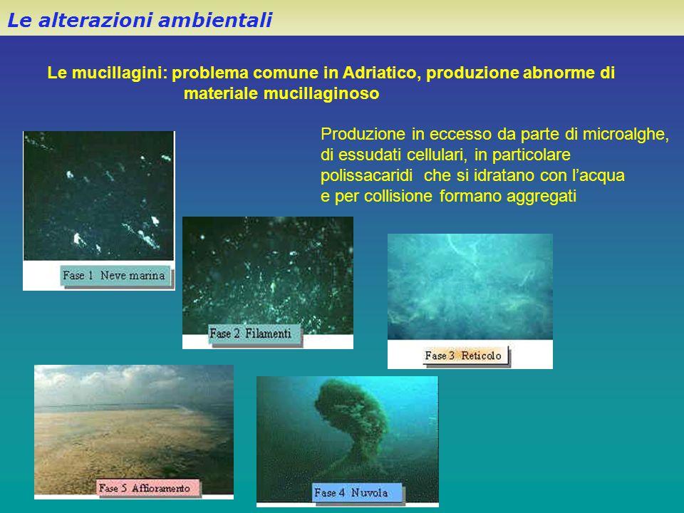 Le mucillagini: problema comune in Adriatico, produzione abnorme di materiale mucillaginoso Le alterazioni ambientali Produzione in eccesso da parte d