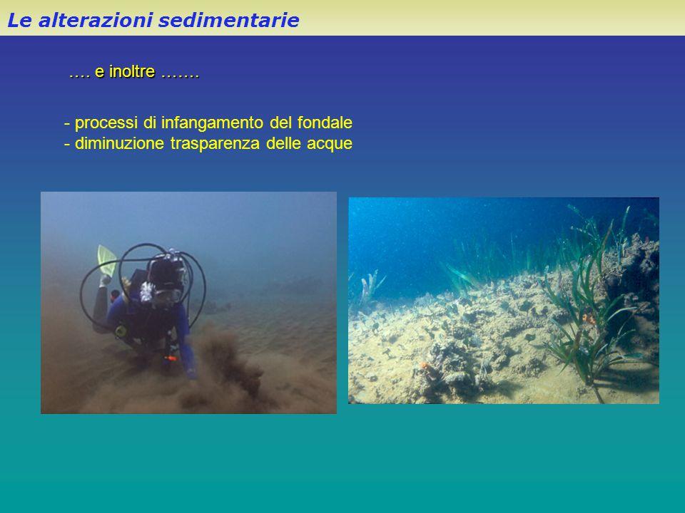 Le alterazioni sedimentarie …. e inoltre ……. - processi di infangamento del fondale - diminuzione trasparenza delle acque
