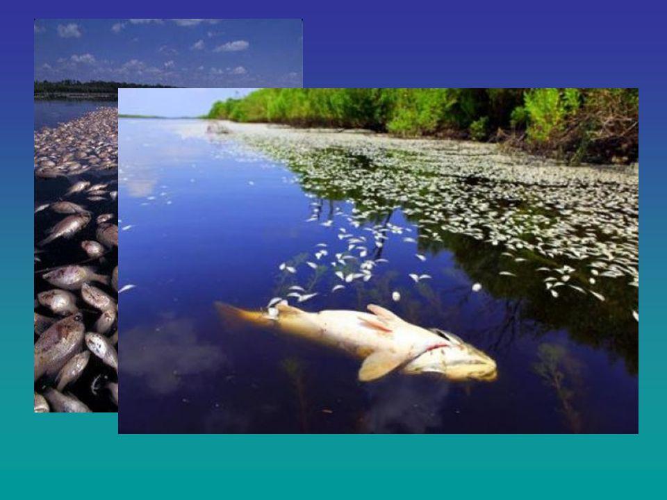 Le alterazioni ambientali L'inquinamento termico Fonte è l'acqua di raffreddamento delle centrali elettriche Effetti: Diminuisce l'ossigeno disciolto nell'acqua Aumenta il tasso metabolico degli organismi Interferisce con la riproduzione Aumenta la vulnerabilità alle malattie Può indurre mortalità diretta