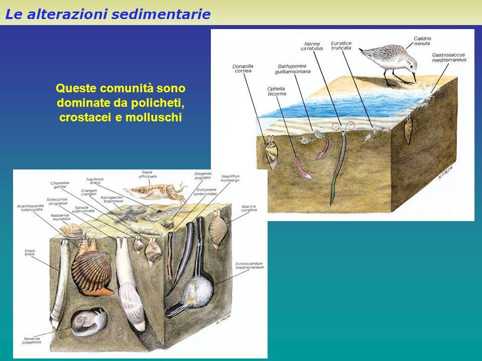 Le alterazioni sedimentarie Queste comunità sono dominate da policheti, crostacei e molluschi