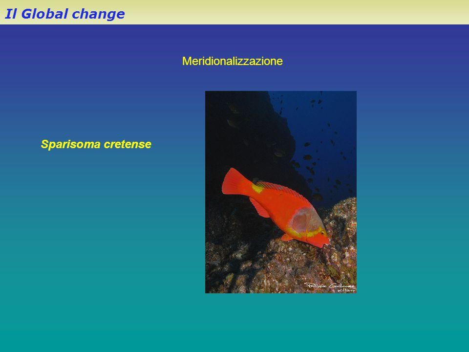 Il Global change Sparisoma cretense Meridionalizzazione