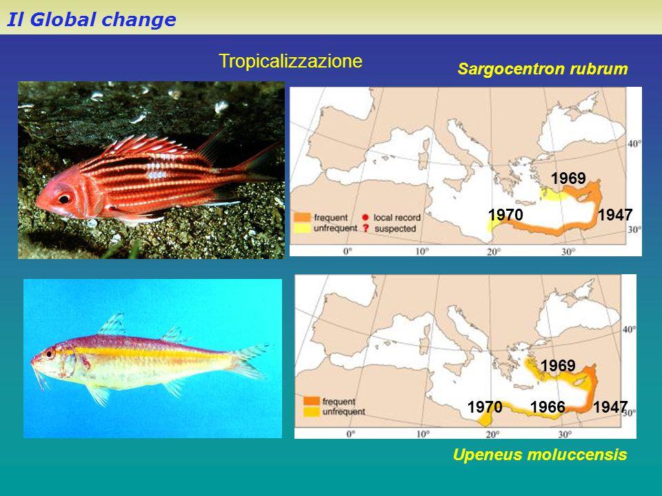 Il Global change Sargocentron rubrum Upeneus moluccensis 194719661970 1969 1947 1969 1970 Tropicalizzazione