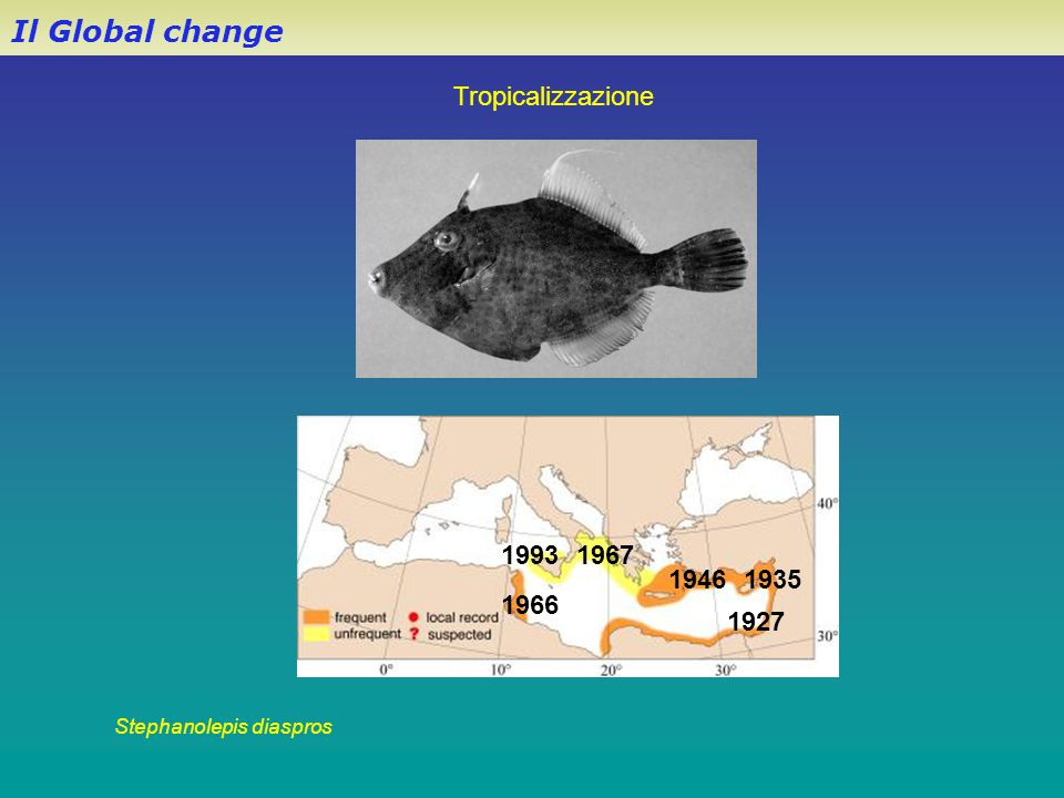 Il Global change Stephanolepis diaspros 1927 19351946 1966 19671993 Tropicalizzazione