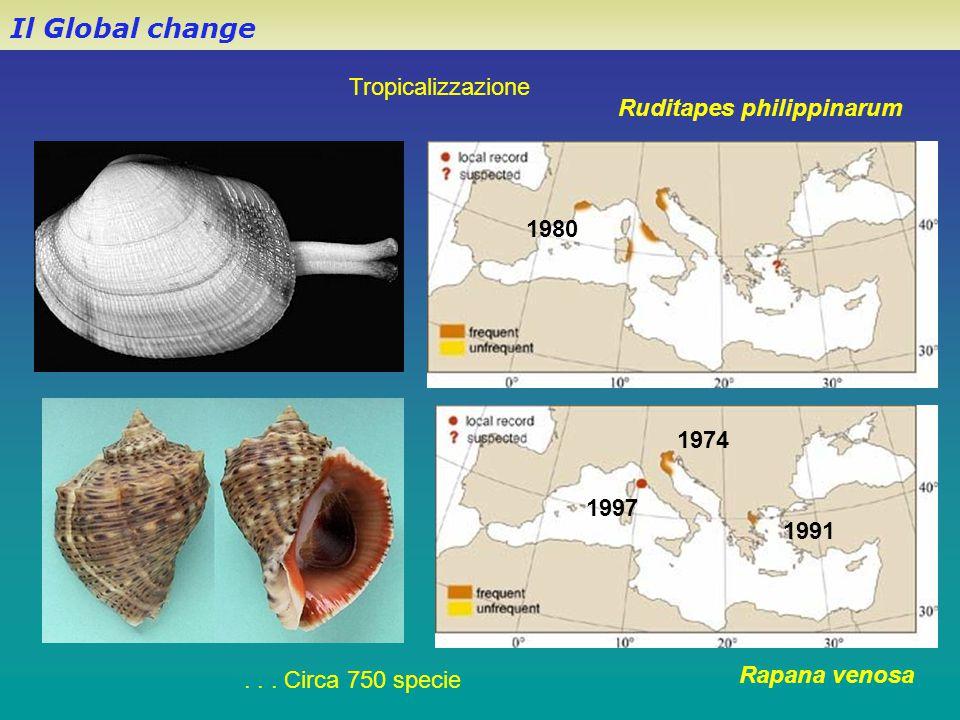 Il Global change Rapana venosa 1997 1974 1991 1980 Ruditapes philippinarum Tropicalizzazione... Circa 750 specie