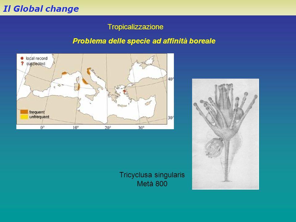 Il Global change Problema delle specie ad affinità boreale Tropicalizzazione Tricyclusa singularis Metà 800