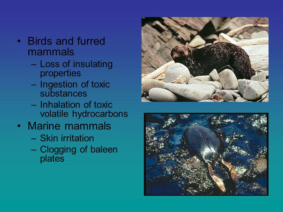 Impact of oil on organisms Marine turtles –Disturbance to nesting habitat Special habitats –coral reefs –tidal flats –mangrove forests