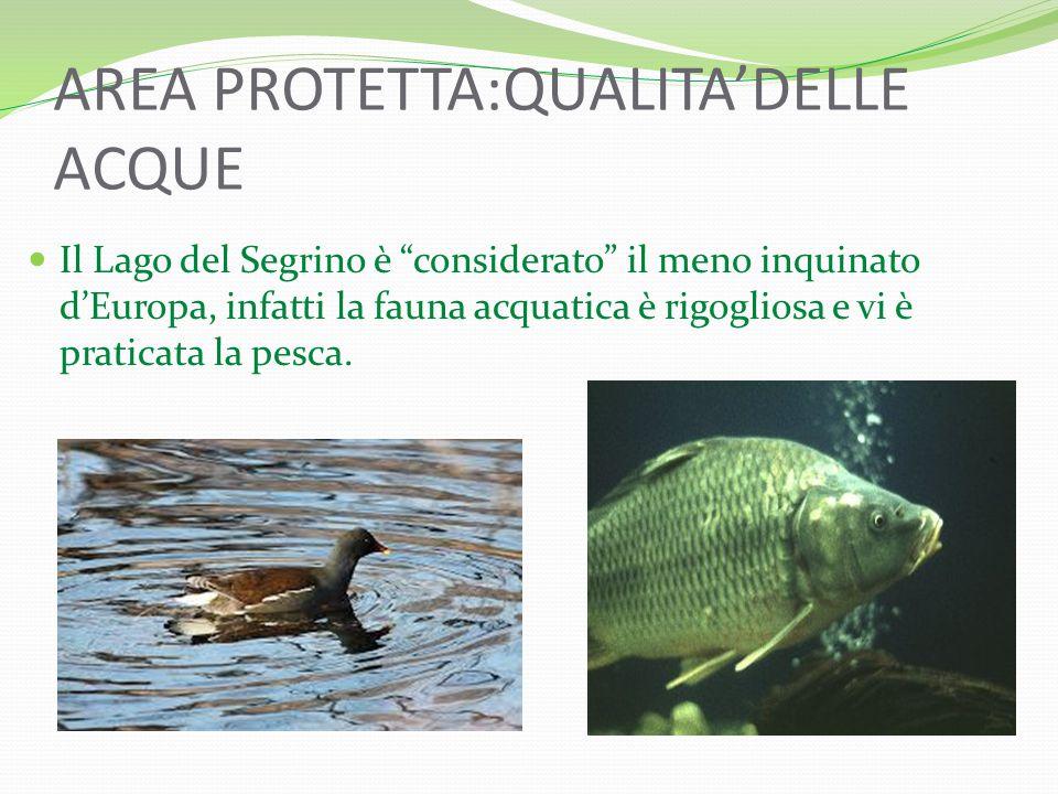 AREA PROTETTA:QUALITA'DELLE ACQUE Il Lago del Segrino è considerato il meno inquinato d'Europa, infatti la fauna acquatica è rigogliosa e vi è praticata la pesca.