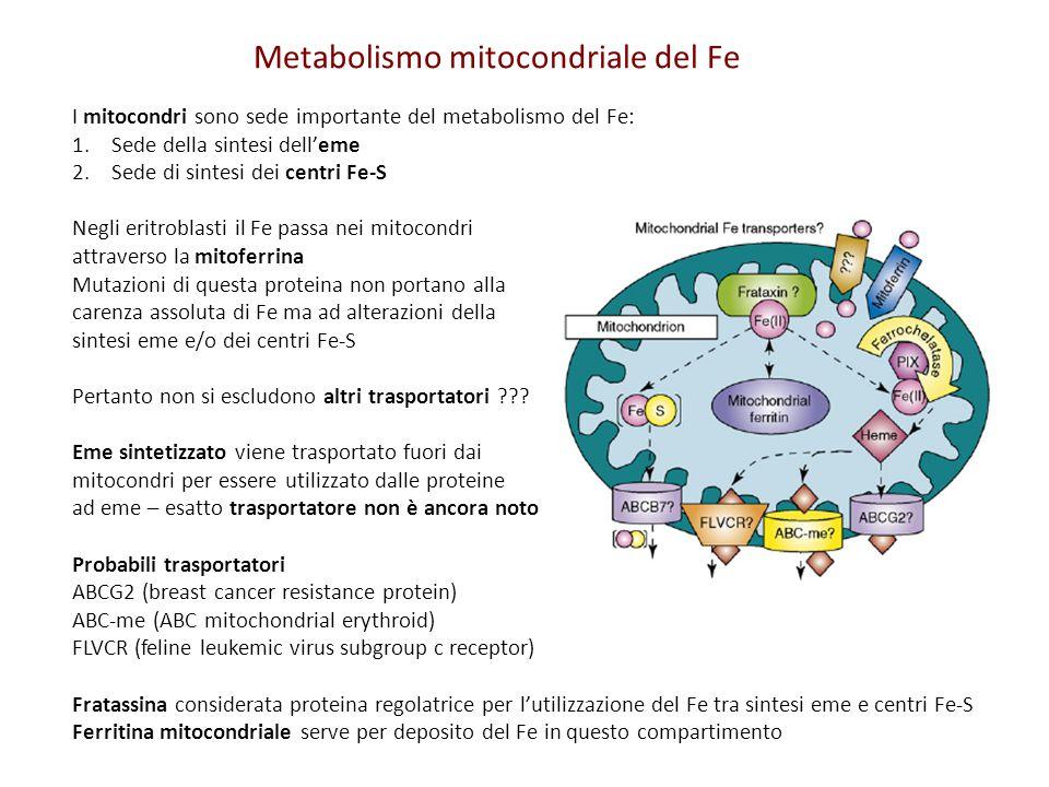 Metabolismo mitocondriale del Fe I mitocondri sono sede importante del metabolismo del Fe: 1.Sede della sintesi dell'eme 2.Sede di sintesi dei centri