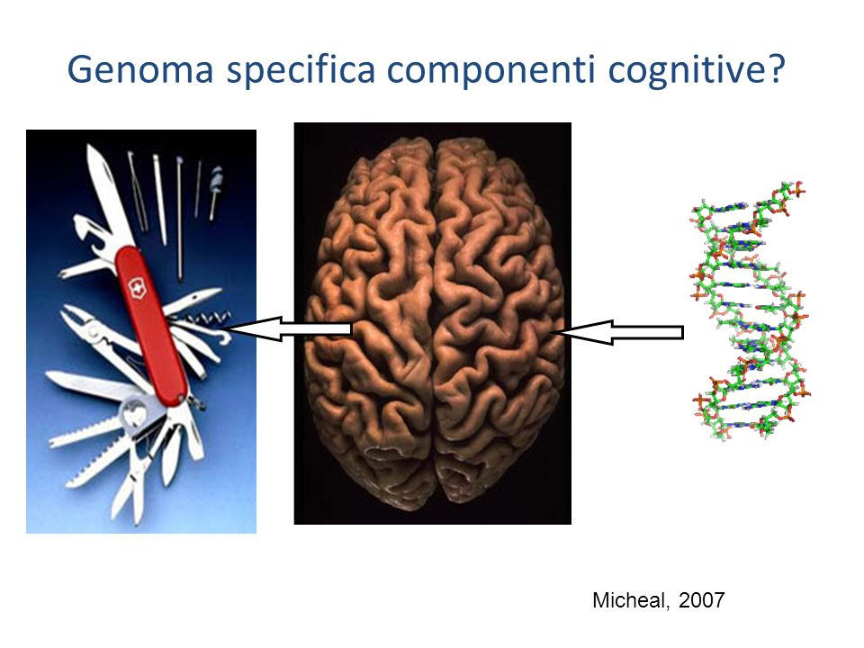 Genoma specifica componenti cognitive? Micheal, 2007
