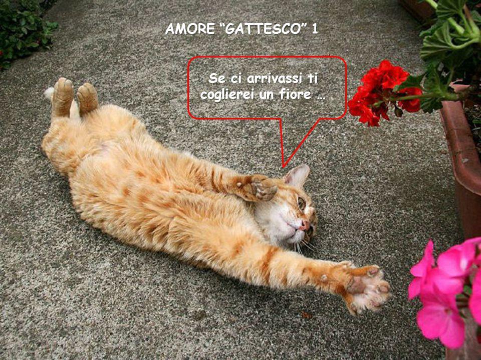 AMORE GATTESCO 1 Se ci arrivassi ti coglierei un fiore …