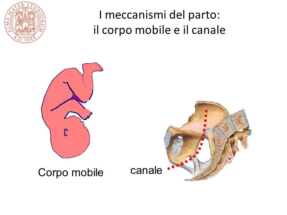 I meccanismi del parto: il corpo mobile e il canale Corpo mobile canale